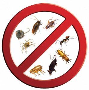 شركة مكافحة حشرات بالعوالي